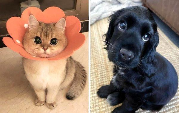 12+ pets with cartoon eyes that could easily be Disney characters - 1