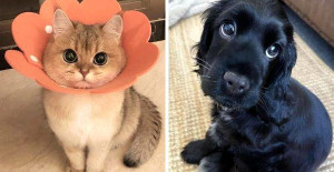 12+ pets with cartoon eyes that could easily be Disney characters