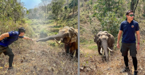 Heartwarming Moment Wild Elephant Recognises The Vet Who Treated Him 12 Years Ago