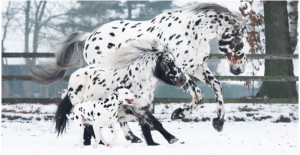 A Cute Trio Of Black-Spotted Horse, Pony, And Dog Looks Like Siblings And Forms A Special Bond Together