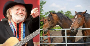 Willie Nelson rescued 70 horses from a slaughterhouse to roam free at his Texas ranch